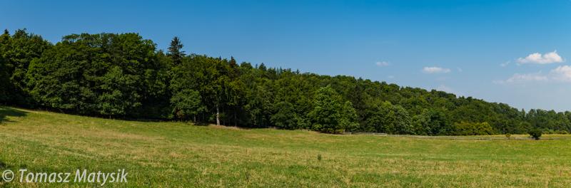 Panorama drzewostanu Uroczyska od zachodu