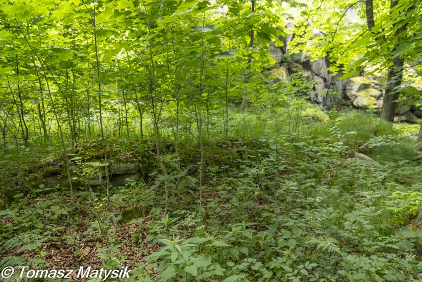 Ruiny schroniska przy Bobrowych Skałach